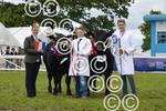 RHS beef young handler top two and judge.JPG