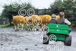 Craggs-Texel-Green-1--Boys and Sheep .JPG