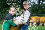 Craggs-Texel-Green-1--Boysand Sheep .JPG